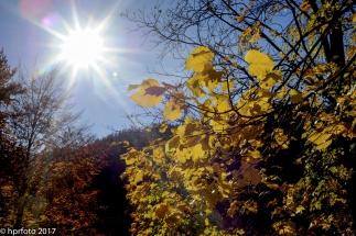 Sonne pur. Den Herbst erleben uns Sonne tanken.....bei diesem Wetter kein Rroblem. Aufgenommen in Bad Faulenbach/Füssen.